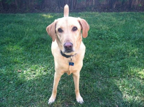 Researcher of the Month: Dog named Boone from the lab